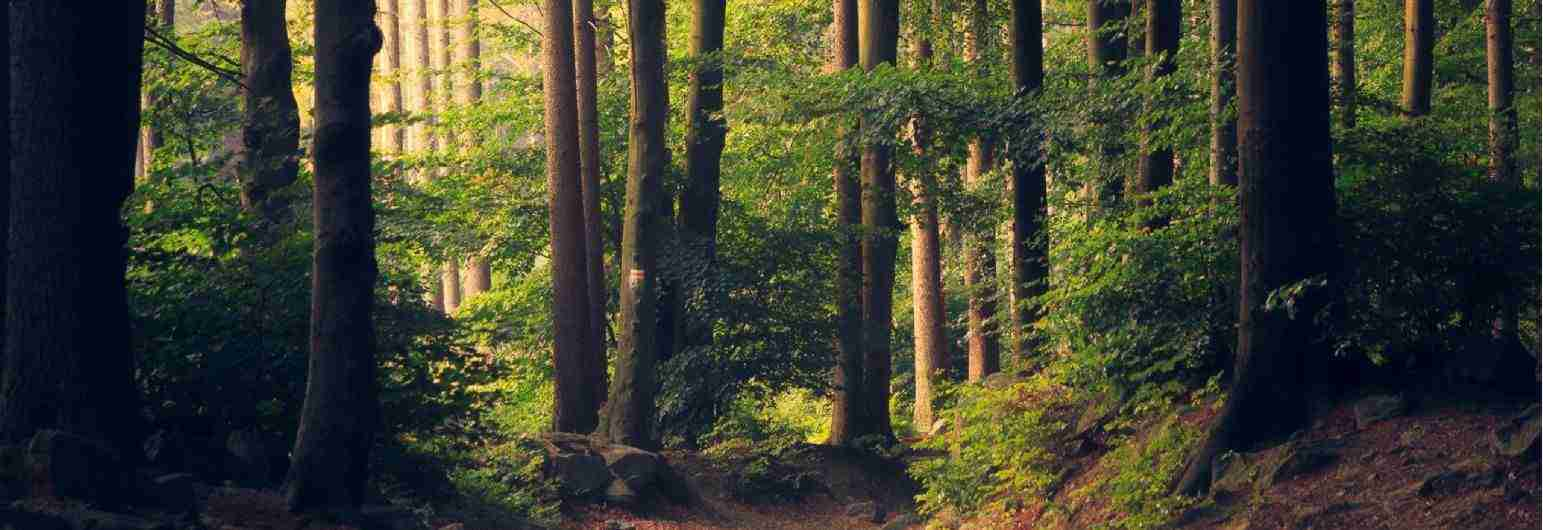 Savills UK | Buying or Selling a Forest or Woodland
