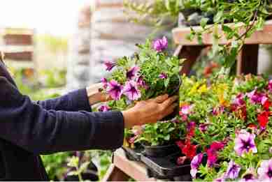 Popularity of garden centre assets continues to bloom