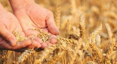 Converting from conventional arable farming to organic production