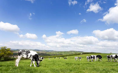 Record low farmland offerings as Brexit fatigue sets in