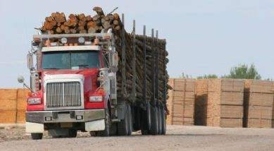 Worldwide trade of timber is on the rise